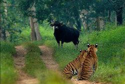 bhadra-wildlife-sanctuary