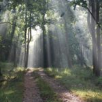chikmagalur forest stay